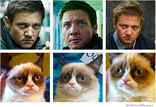 jeremy-renner-is-grumpy-cat.jpg
